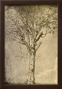 Drawing a Tree by Leonardo da Vinci Giclee Print by Bettmann at Art.com