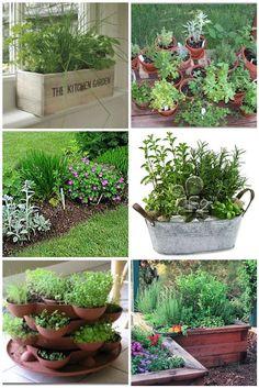 Starting your own herb garden.