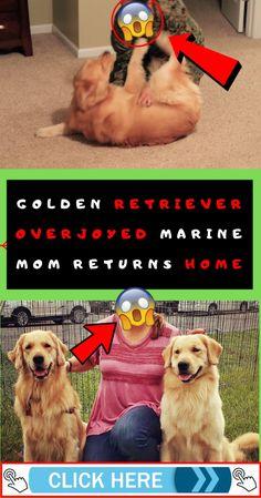 Golden Retriever Overjoyed Marine Mom Returns Home Cool Pins, Level Up, Animal House, New Pins, Funny Fails, Mystery, Weird, Cute Animals