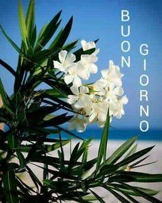 """White Oleander"""" by Greg Riegler"""