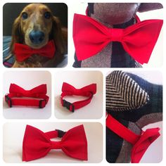 Summer HUGE SALE Bright Plain Red Dog Cat Pet Collar with by RoomH, $6.00