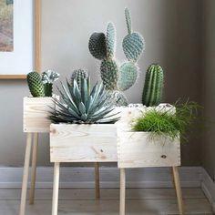 Zimmerpflanzen arrangieren