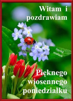 Good Morning Funny, Morning Humor, Plants, Pictures, Polish, Photos, Plant, Grimm, Planets