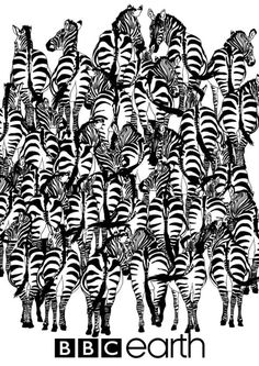 """This illustration from the BBC Earth is a wildlife """"Where's Waldo?"""" Somewhere in the herd of zebra is a badger. Can you spot it? Hidden Images, Hidden Pictures, Zebras, Simple Optical Illusions, Reto Mental, Zebra Pictures, Riddle Games, Bizarre Photos, Humor"""