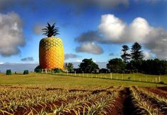 Six Totally Unique Places to Visit in Africa: The Big Pineapple Bathurst, Eastern Cape, South Africa If you've ever wondered where you can find the world's largest artificial pineapple, your curious. Big Pineapple, Walkabout, Places Of Interest, Travel And Tourism, 30, The Locals, South Africa, Places To Visit, Explore