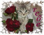 Мобильный LiveInternet ДЛЯ ТЕБЯ! КАРТИНКИ И ОТКРЫТКИ. | Leovik10 - Анимация, картинки, открытки, музыка, фото | Cats, Animals, Gatos, Animales, Animaux, Animal, Cat, Animais, Kitty