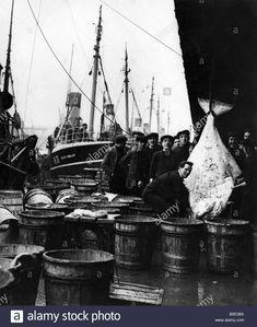 fishing-industry-at-hull-1310a-fish-market-st-andrews-dock-1310april-B5E38A.jpg (1094×1390)