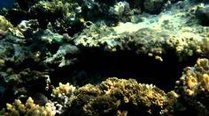 Snorkeling at Tiran Island.mpg