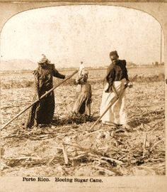 Women working in cane fields, Puerto Rico, 1899. (as the story goes, my abuela Petra was working like this when she went into labor to have my father)