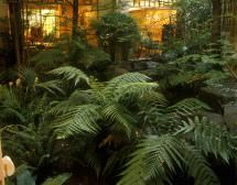 Plantas para patios con poca luz: Los Helechos