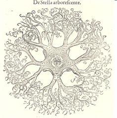 rizoma deleuze guattari - Pesquisa Google