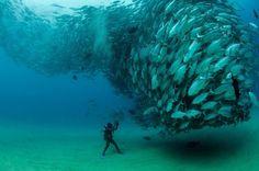 Una de la mejores fotos del 2012. Seleccionada por el World Press Photo. Nos encanta