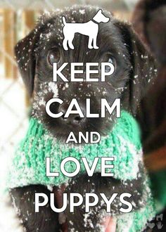 KEEP CALM AND LOVE PUPPYS