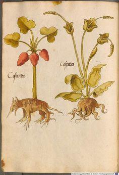 Medieval German herbology) links to full book)