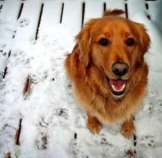 Tipps und Infos zur Wurmkur für Hunde in unserem Hundeblog unter http://www.diehundewiese.de/gesundheit/die-wurmkur-wichtige-entwurmung-fur-hunde/ hund hunde dog dogs