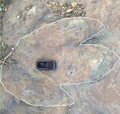 Dinosaur footprint.  The white line helps to show the outline of the track.