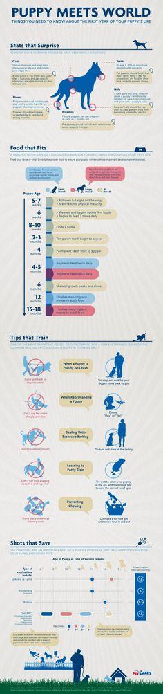Basic Dog Training - CLICK THE IMAGE for Many Dog Care and Training Ideas. #basicdogtraining #dogobediencetraining