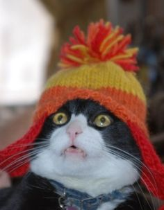 @Shauna Rowley I imagine Kippy would make this face if you put a hat on her.    It's true