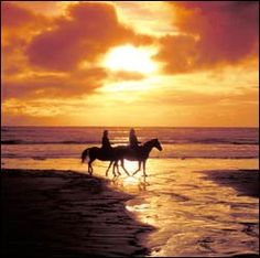 Horse back riding is great. Horseback riding on the beach is awesome. Horseback riding on the beach at sunset with a handsome man, is exhilarating!