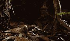 croissance-de-champignons-en-timelapse-3