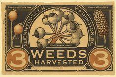 The Invasive Species Harvest. alienweeds.com #harvesting