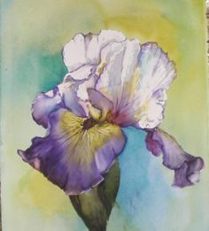 watercolor iris paintings | single Iris Painting by Diane Ziemski - single Iris Fine Art Prints ...