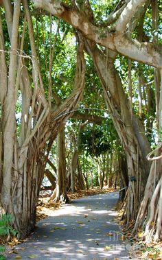 Archway At Selby Gardens Sarasota Florida #kidandcoe #bringthekids Sarasota Florida, Florida Vacation, Florida Travel, Florida Beaches, Vacation Spots, Clearwater Florida, Beach Travel, Kissimmee Florida, Florida Usa