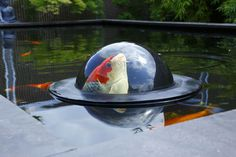 Solar Pond Fountain: Floating Pond Fountain | Gardeners.com