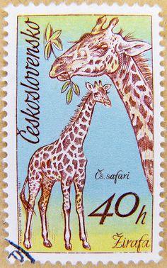 stamp Czechoslovakia 40h Giraffe Zirafa (Giraffa camelopardalis)