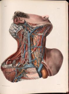 Lymphatic vessels of the neck and head.