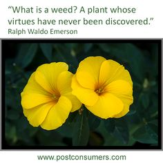 #QuoteoftheDay - A weed is still a plant!