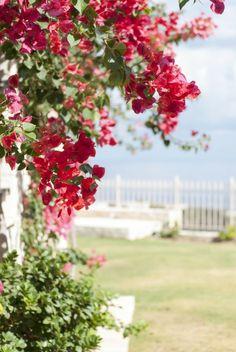 gartengestaltung-mediterrane-bougainvillea-pink-bluete-attraktiv-kletterpflanze-tipps