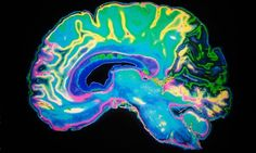 'Our brain is essentially a get-out-of-the-way machine,' says Harvard psychology professor Daniel Gilbert
