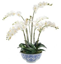 Picture of White and Cream Phalaenopsis Orchid in a Porcelain Blue and White Bowl-FREE SHIPPING!