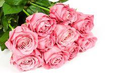 Podniosłem się, Goździk, kwiaty, białe tło wektor