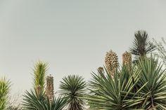 Cactus Growing in Desert Free Photo - Gratisography Stock Photo Sites, Free Stock Photos, Free Photos, African American Artist, American Artists, Image Photography, Street Photography, Free High Resolution Photos, Social Media Images