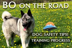 Traveling with Bo: Training update and safety product suggestions - RV Lifestyle