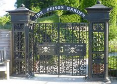 "To enter the poison garden of Alnwick you must fetch a guide to unlock the black iron gates, which are decorated with a white skull and crossbones and a worrying message: ""These plants can kill.""   Inspired by the legendary posion gardens in Padua where the Medicis plotted the untimely, frothing ends of their royal enemies, the Duchess of Northumberland created this garden in 2005, dedicating it entirely to flora which are poisonous or narcotic."