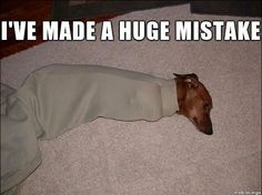 Best Dachshund Memes! - Sausage Dog Central