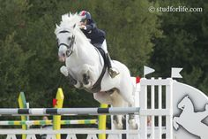 Dexter Leam Pondi, Connemara stallion. Pony Breeds, Horse Breeds, Connemara Pony, Hunter Jumper, Palomino, Dexter, Horse Riding, Dressage, Hunters