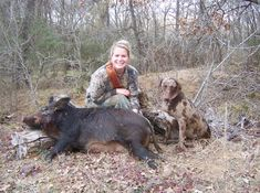 A Catahoula dog and wild boar hunting.