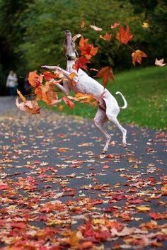 the joy of Fall....#hiphop #beats updated daily => http://www.beatzbylekz.ca/