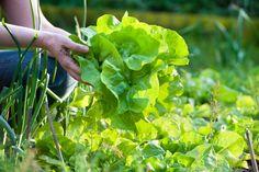 #Gardening ideas for your backyard #garden.  http://www.organicauthority.com/15-fantastic-green-gardening-ideas-and-hacks/