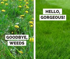 Have fewer weeds this fall with these professional tips