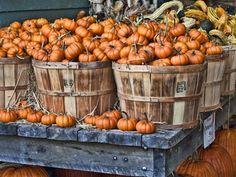 25 pumpkin patches near Washington, D.C., mapped