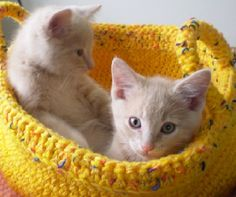 "The ""Cat Brothers"" exploring a yarn basket!"