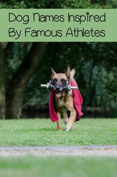 Check Out Our Favorite Athletic Names For Dogs