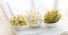 Sprouting is the practice of germinating seeds (especially Pulses (legumes; pea family) like chickpea, mung bean and soybean (bean sprouts), etc.) to be eaten raw or cooked. Sprouted foods are Portobello Rellenos, Healthy Cooking, Healthy Eating, Growing Sprouts, Sprout Recipes, Eating Raw, Food Facts, Fresh Vegetables, Veggies