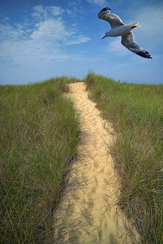 Sandy Path To the Beach ....