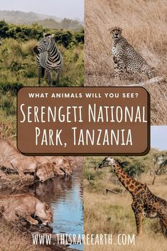 Tanzania Safari, Serengeti National Park, Dar Es Salaam, List Of Animals, Africa Travel, Travel Guide, Travel Inspiration, Road Trip, National Parks